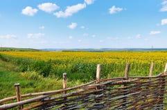 Landschaft mit einem Feld von Sonnenblumen Lizenzfreie Stockbilder