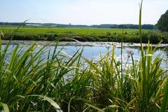 Landschaft mit einem Fluss Lizenzfreies Stockbild