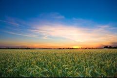 Landschaft mit einem glänzend ausführlichen Vordergrund stockbild