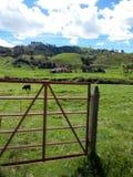 Landschaft mit einem Haus und Kühen Stockfotos