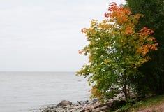 Landschaft mit einem Herbstahorn Lizenzfreies Stockbild