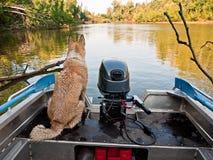 Landschaft mit einem Hund Stockbild
