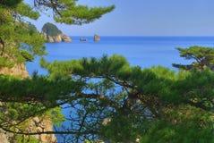 Landschaft mit einem pine-4 Lizenzfreie Stockfotografie