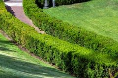 Landschaft mit einer Hecke von Buchsbaumbüschen stockfoto