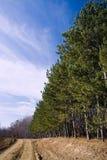 Landschaft mit einer Reihe der Tannen Lizenzfreie Stockfotos