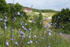Landschaft mit einer Wiese der Zichorie und des Hügels, auf der es eine Struktur im Abstand gibt lizenzfreies stockfoto