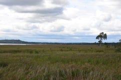 Landschaft mit einsamem Baum Stockfotos