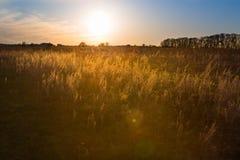 Landschaft mit Feld Stockbilder