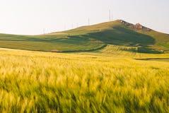 Landschaft mit Feld der grünen Ernte Lizenzfreies Stockbild