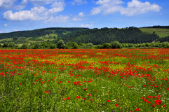 Landschaft mit Feld der Mohnblumen stockfotografie