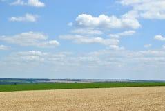 Landschaft mit Feld des Weizens Lizenzfreies Stockfoto