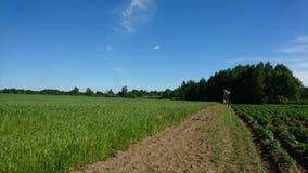 Landschaft mit Feld und Vogelscheuchen in ihm Lizenzfreies Stockfoto