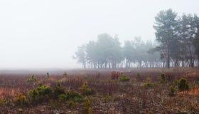 Landschaft mit Feld und Wald im Nebel Lizenzfreie Stockfotos