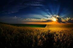 Landschaft mit Feldern im Sommer bei Sonnenuntergang Lizenzfreies Stockfoto