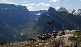 Landschaft mit Geiern Stockfoto