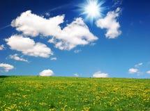 Landschaft mit gelbem Löwenzahn Stockbild