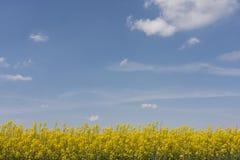 Landschaft mit gelbem Raps Lizenzfreie Stockfotografie