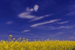 Landschaft mit gelbem Raps Stockbilder