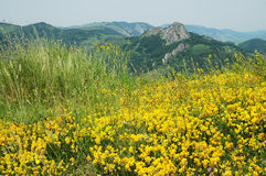 Landschaft mit gelben Blumen Stockfotos