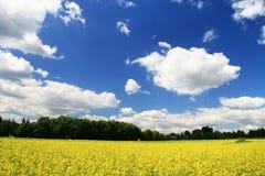 Landschaft mit gelben Blumen lizenzfreie stockfotos