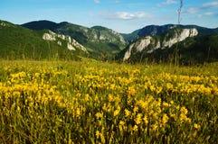 Landschaft mit gelben Blumen und blauem Himmel Lizenzfreies Stockbild