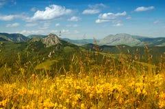 Landschaft mit gelben Blumen und blauem Himmel Lizenzfreie Stockbilder