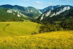 Landschaft mit gelben Blumen und blauem Himmel Stockfotos