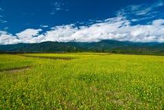 Landschaft mit gelber Wiese Lizenzfreies Stockfoto