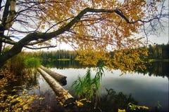 Landschaft mit Herbstsee Stockbilder