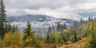 Landschaft mit Herbstwald Lizenzfreies Stockbild