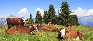 Landschaft mit Kühen Stockbild