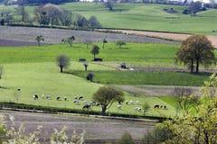 Landschaft mit Kühen und der Landwirtschaft Lizenzfreies Stockbild
