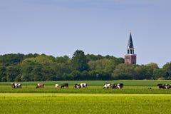 Landschaft mit Kirche und Kühen Stockfoto