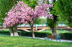 Landschaft mit Kirschblüten auf der Ufergegend Lizenzfreie Stockfotos