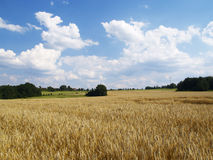 Landschaft mit Kornfeld Stockfoto