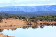 Landschaft mit Kudu. Lizenzfreie Stockfotografie