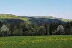 Landschaft mit Löwenzahn Stockfotografie