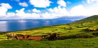 Landschaft mit Landwirtschaftsfeldern in Corvo-Insel, Azoren, Portugal lizenzfreie stockfotografie