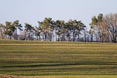 Landschaft mit langen Schatten lizenzfreie stockbilder