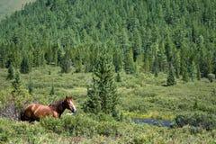 Landschaft mit laufendem Pferd Stockbilder