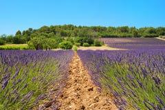 Landschaft mit Lavendel Lizenzfreies Stockfoto
