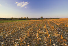 Landschaft mit Maisfeld Stubble am Sonnenuntergang lizenzfreie stockfotos