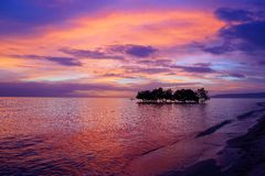 Mangrovenbaum. Siquijor Insel, Philippinen Stockfotos