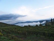 Landschaft mit Nebel und Weinbergen Lizenzfreies Stockfoto