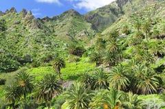 Landschaft mit Palmen Lizenzfreies Stockfoto