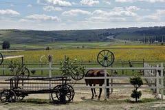 Landschaft mit Pferd Stockfotografie