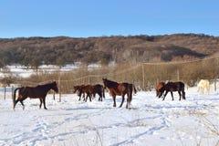 Landschaft mit Pferden Stockfotos