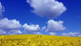 Landschaft mit Rapsfeld Stockbild