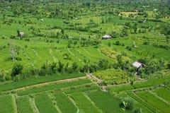 Landschaft mit Reisfeldern lizenzfreie stockbilder