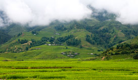 Landschaft mit Reisfeldern in Vietnam Lizenzfreie Stockfotografie